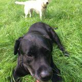 オランダで老犬介護