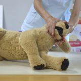 愛犬のピンチを救おう! 救命講座開催