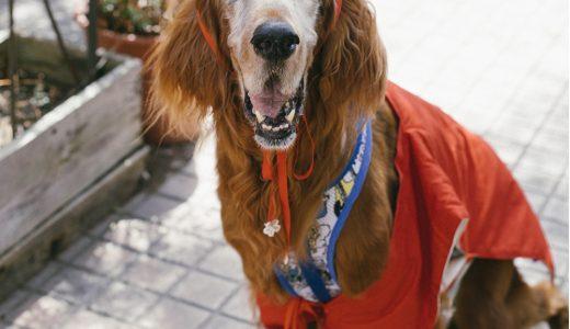 あなたが選ぶご長寿犬スター結果発表