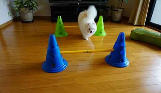モニターモデル犬募集①