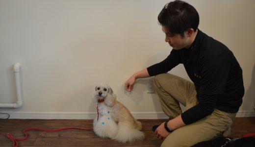 7月号モデル犬募集