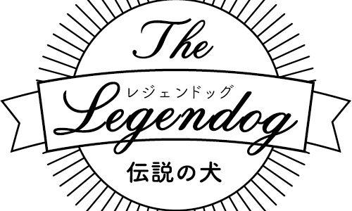 伝説の犬〝レジェンドッグ〟小梅ちゃん(MIX・26歳)