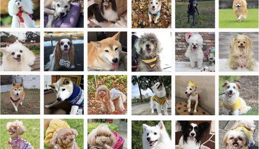 50号表紙モデル犬コンテスト第2次審査通過犬の発表