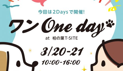 「WALKY WALKY特別セット」を ワンOne dayで限定発売