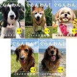 2021イキイキ犬賞 授賞犬発表