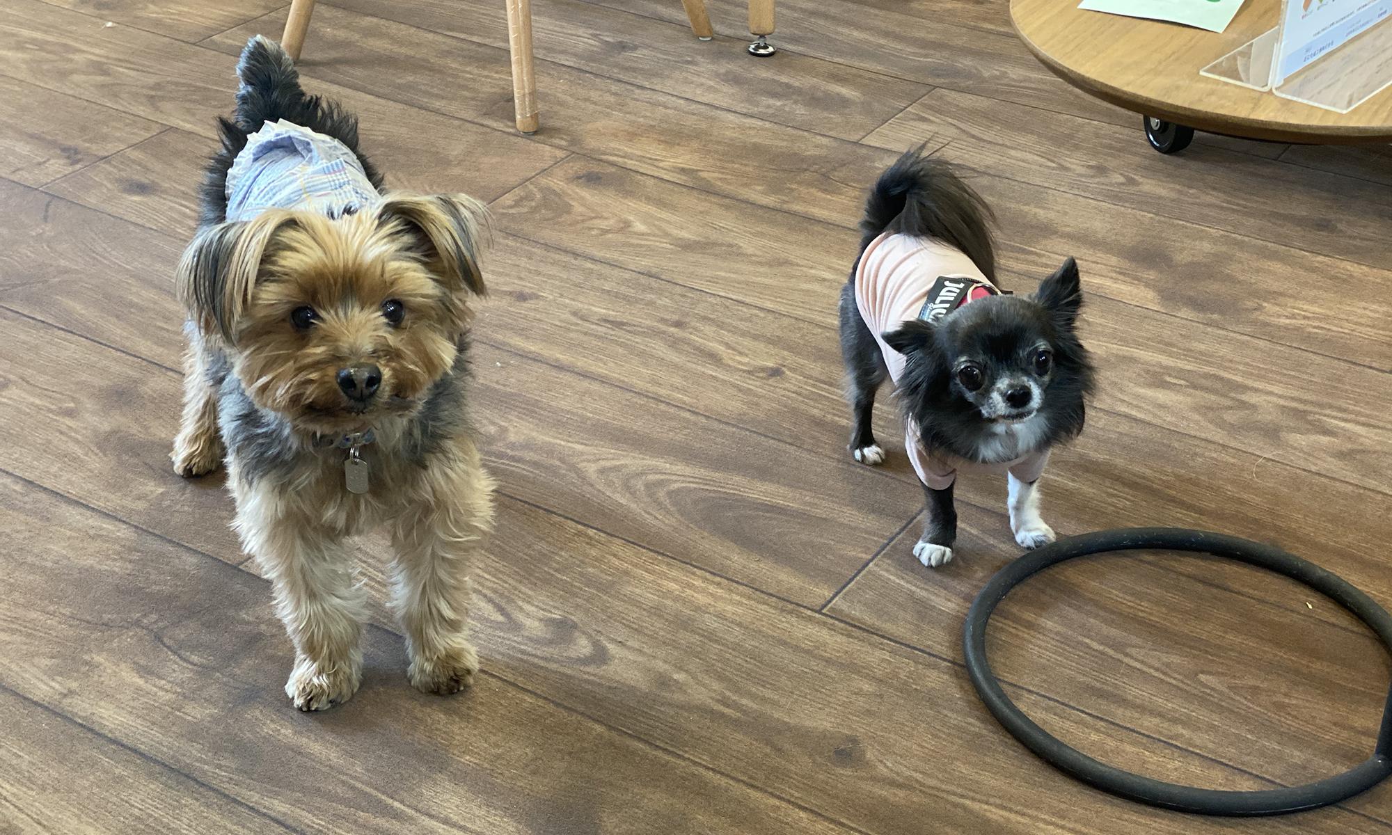 犬の介護ゼロを目指す体験型ドッグカフェ